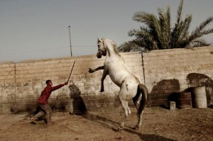 Iraqi - man vs. horse